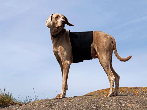Back on Track Hunderückenschoner mit 2 Klettverschlüssen