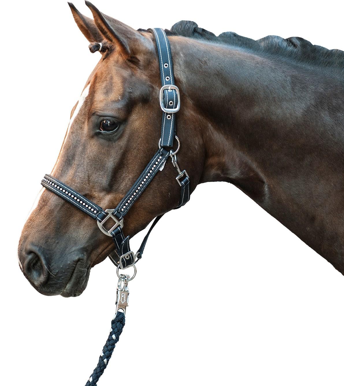 halfter hkm exclusive pferdesport reitsport pferdesport fahrsport und. Black Bedroom Furniture Sets. Home Design Ideas